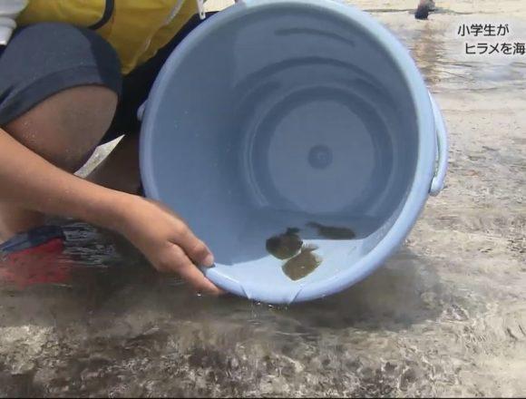 20170707小学生がヒラメを海へ放つ (11)
