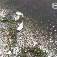 20170711東京湾で赤潮発生異臭漂い魚の死骸も (1)
