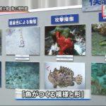 20190813「魚がつくる模様と形」企画展開催 (5)