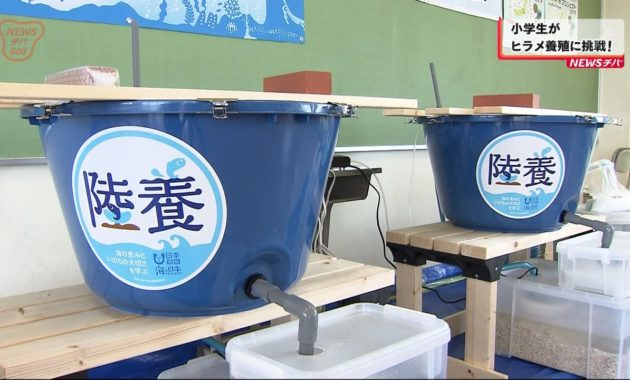 20190925小学生がひらめ養殖に挑戦! (3)